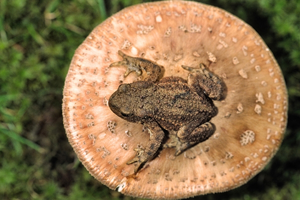 Toad's stool.