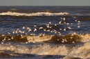 Gulls and Waves 2. Jan. '17.