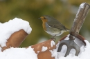 Robin on flowerpots in snow.